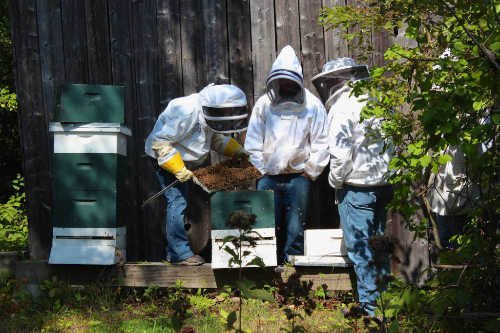 Going into a hive during a beekeeping workshop (Rebekah Carter 2014)