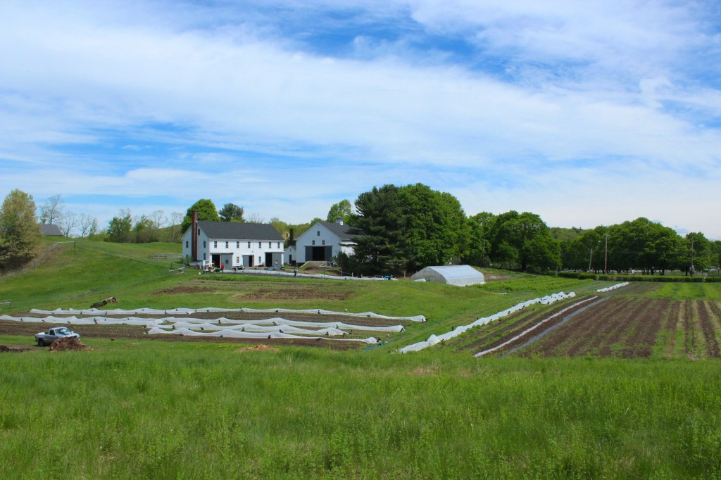 Farmstead in the spring (Rebekah Carter 2014)