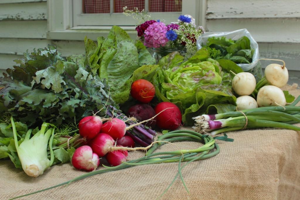 Late June harvest (Rebekah Carter 2014)