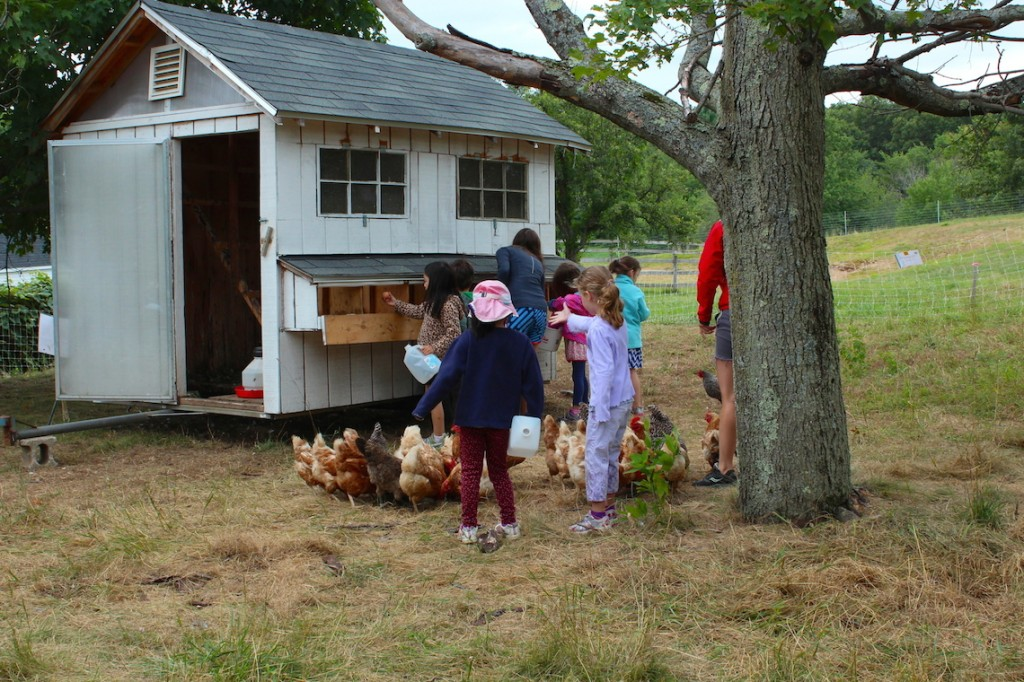 Kids do chicken chores during summer program