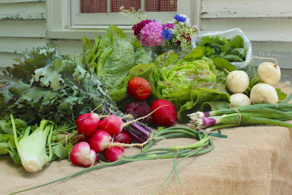 June vegetable harvest at Wright-Locke Farm