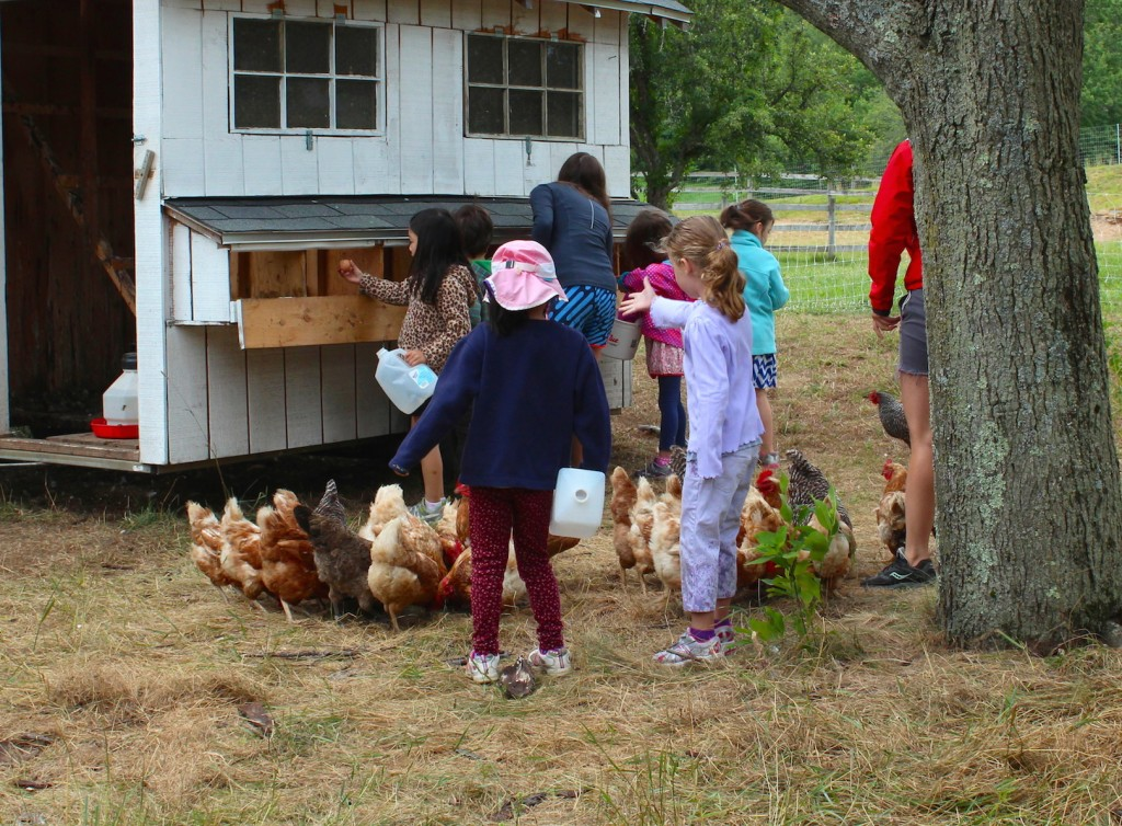 Feeding the chickens (Rebekah Carter 2013)