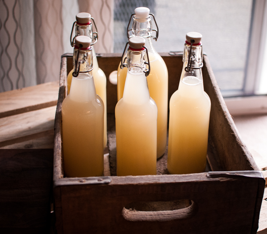 Fermented ginger beer