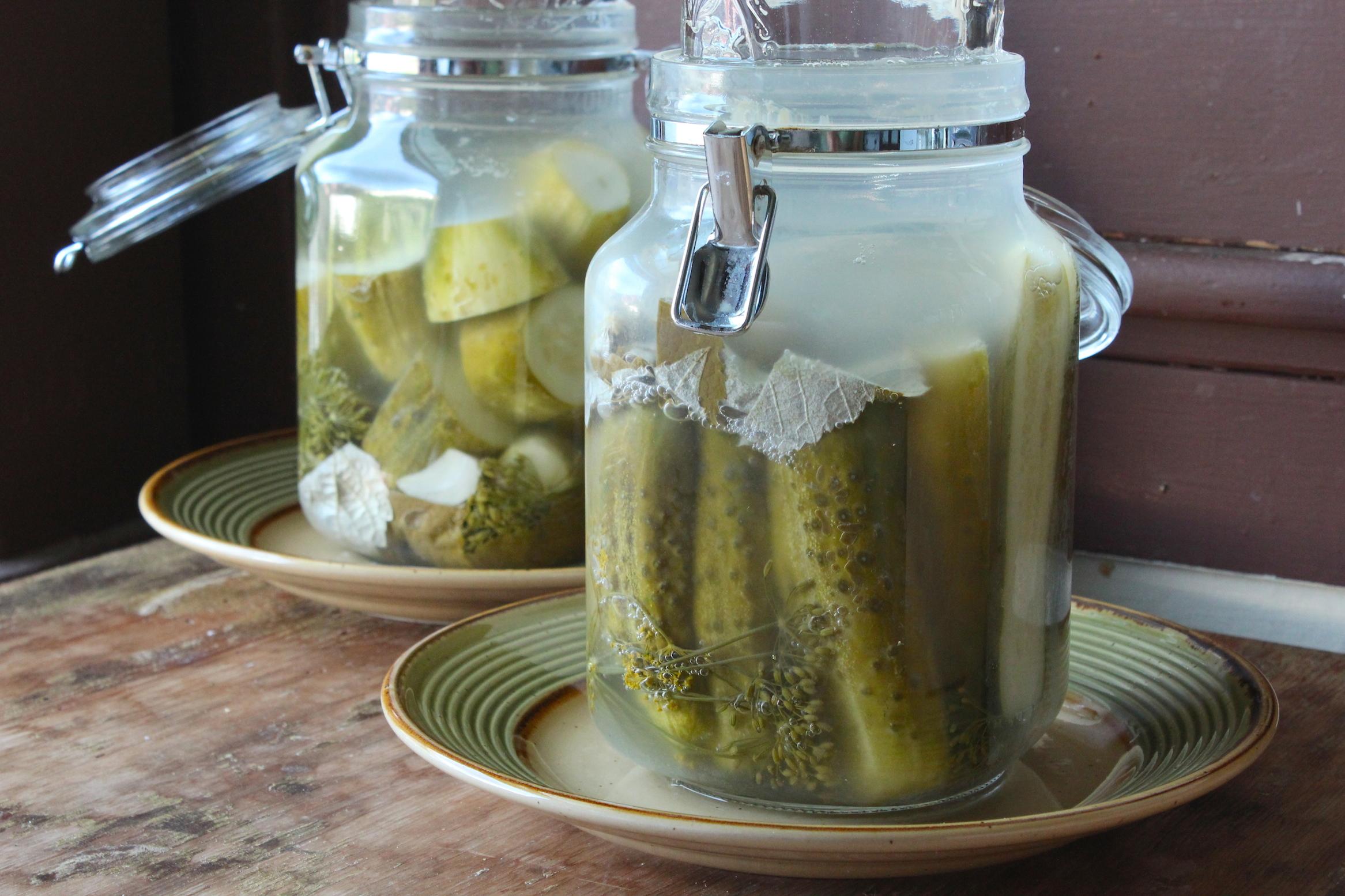 Fermented Sour Dills (Rebekah Carter 2012)