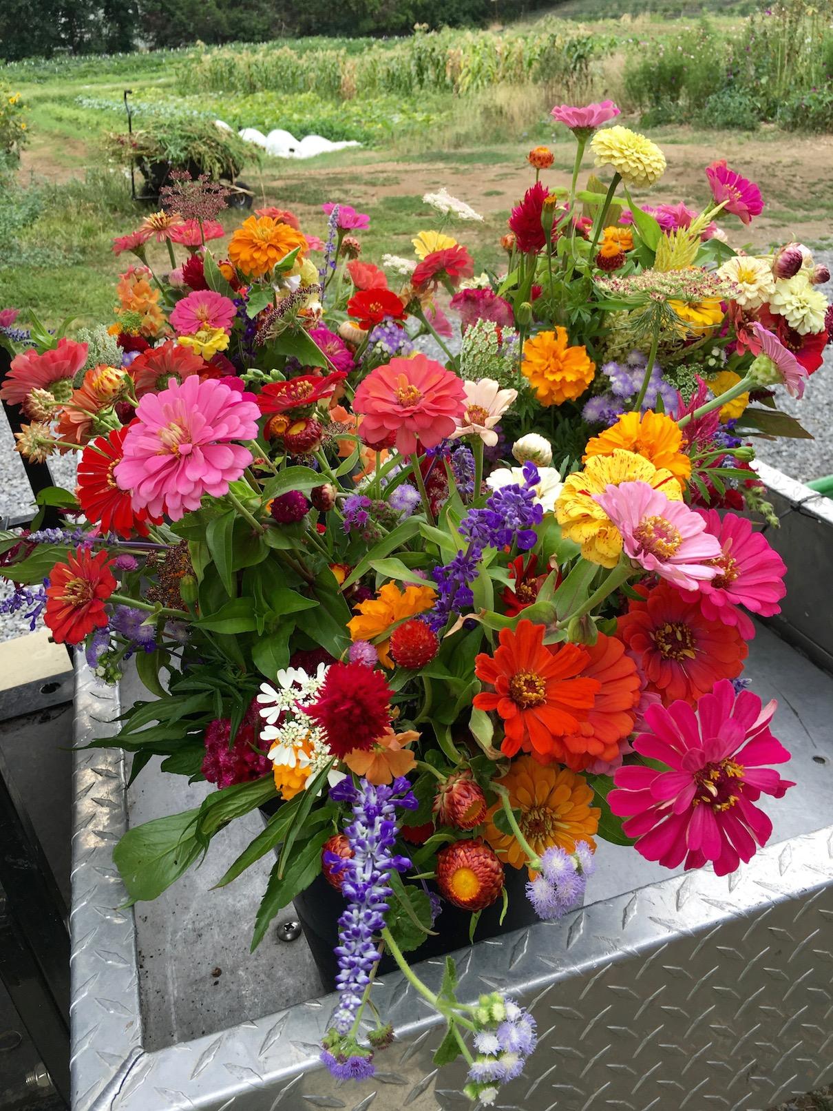 Flower bouquet at Wright-Locke Farm (Ruth Trimarchi)