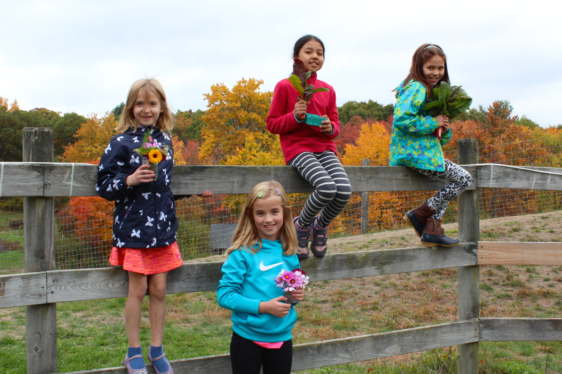 October harvest (Rebekah Carter 2016)