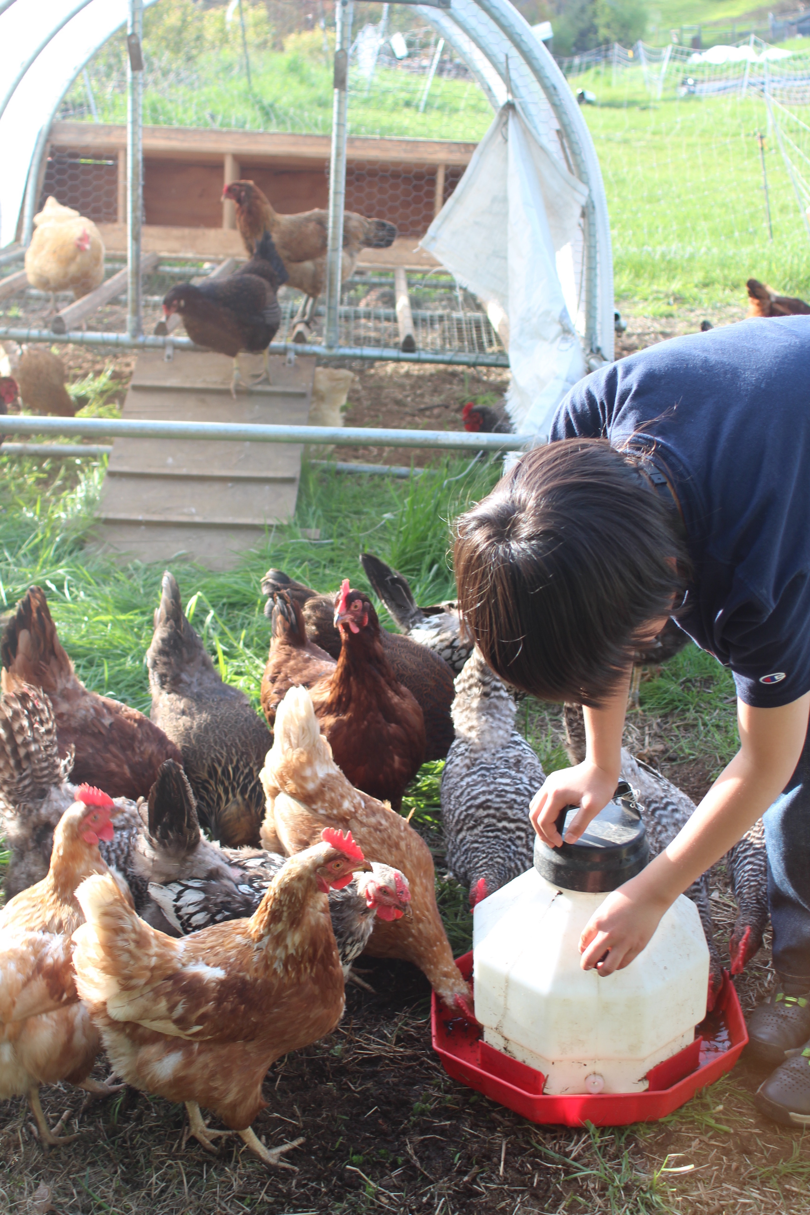 ChickenChores_Web