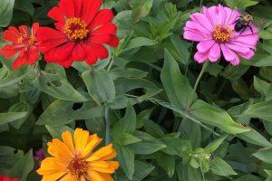U-Pick Flowers